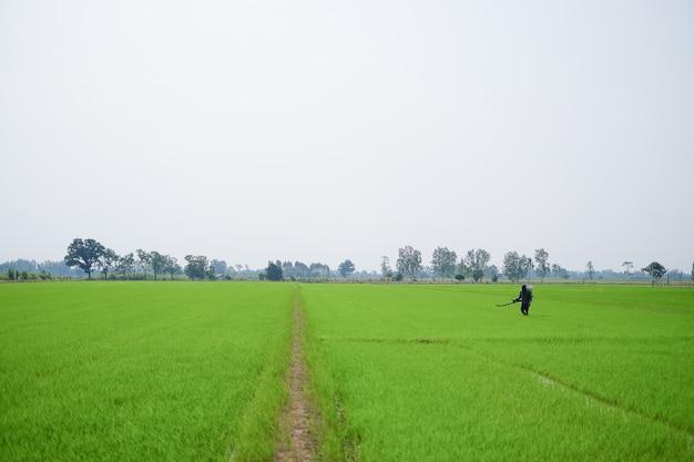 Grande angular de um agricultor carregando um pulverizador de fertilizante químico está caminhando no campo.