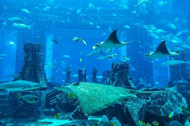 Grande aquário em dubai