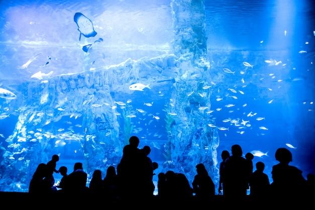 Grande aquário - silhueta de pessoas olhando para muitos peixes.