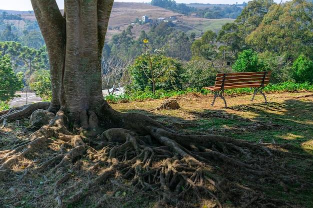 Grande árvore com raízes expostas e banco de madeira para apreciar a paisagem