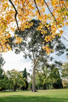 Grande árvore e folhas de outono