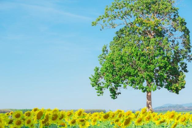 Grande árvore e girassol com fundo de céu azul