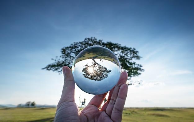 Grande árvore em bola de cristal.