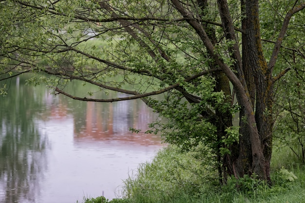 Grande árvore na margem do lago espalhar seus galhos sobre a água em um dia chuvoso