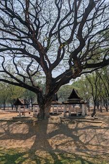 Grande árvore no parque histórico de sukhothai, na tailândia