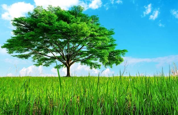 Grande árvore verde com lindos galhos e campo de grama gramado no jardim com céu azul e nuvens