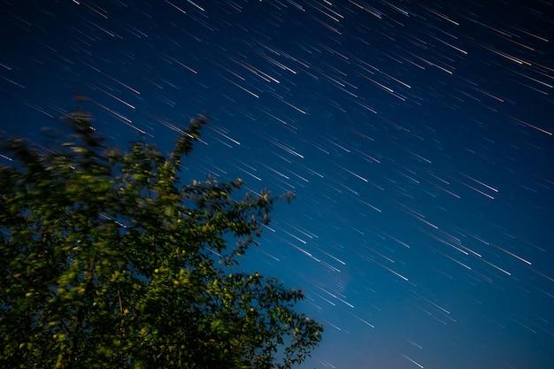 Grande árvore verde no fundo do céu noturno profundo e estrelas cintilantes