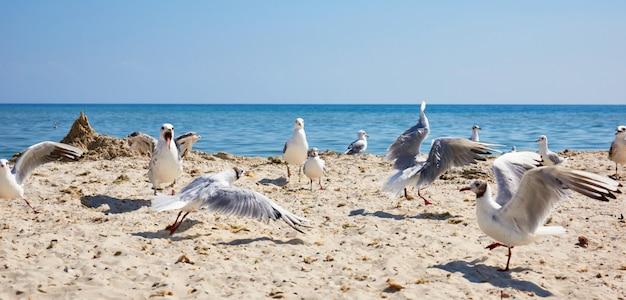 Grande bando de gaivotas brancas na costa arenosa do mar negro