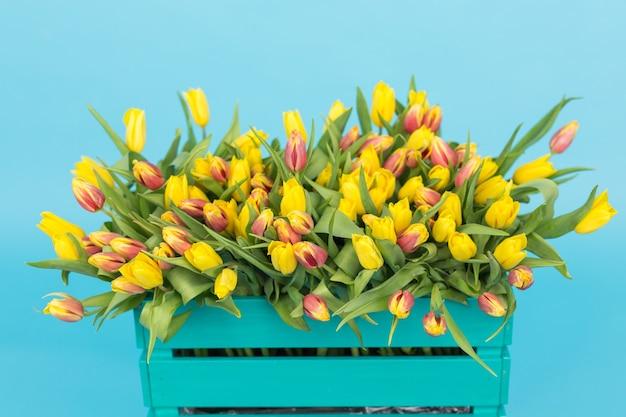 Grande buquê de tulipas vermelhas e amarelas na parede azul