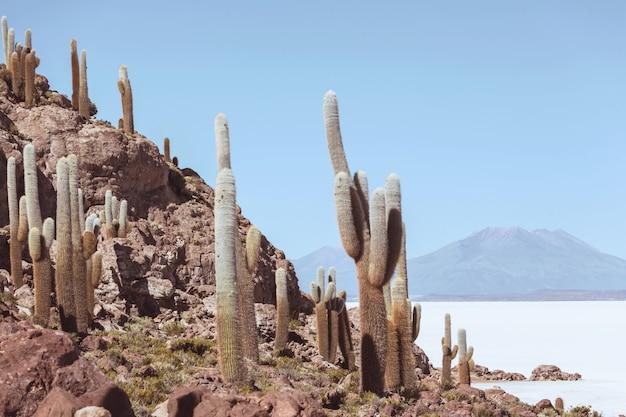 Grande cacto na ilha incahuasi, salar salar de uyuni, altiplano, bolívia. paisagens naturais incomuns desertas viagens solares na américa do sul