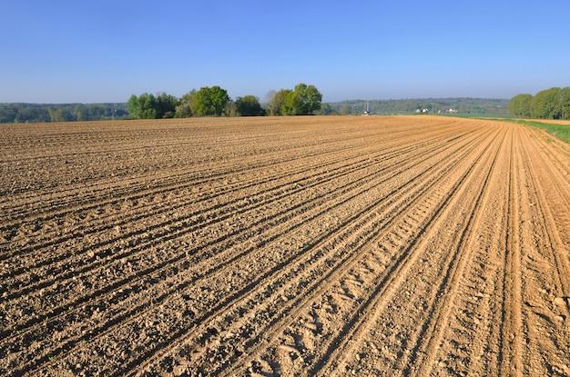 Grande campo de cultivo