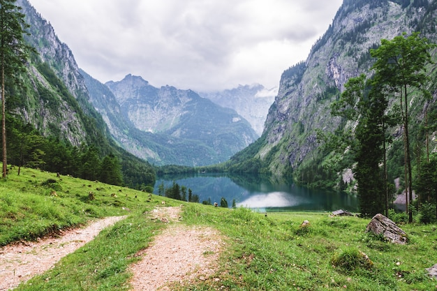 Grande cenário alpino com as vacas no parque nacional berchtesgaden.
