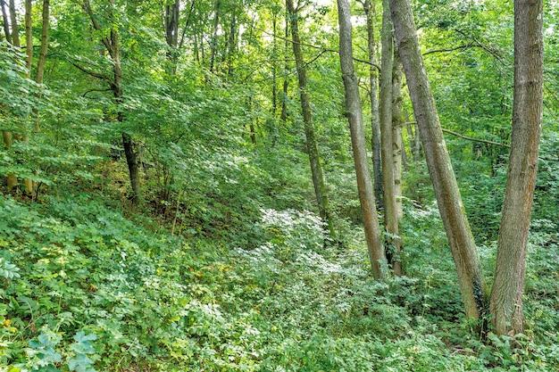 Grande clareira no parque, coberta de grama entre um coníferas e árvores de folha caduca no dia de outono
