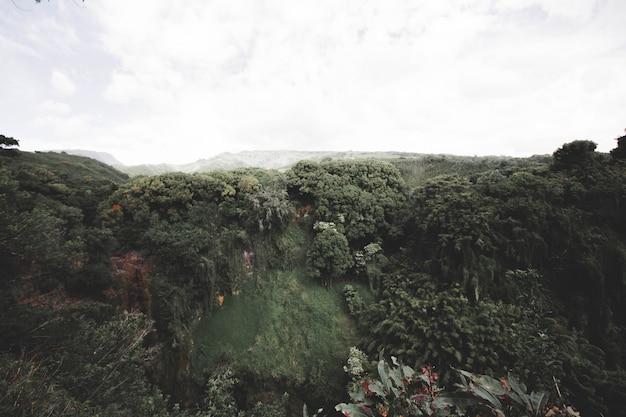 Grande colina com árvores e floresta no topo com céu de nuvens