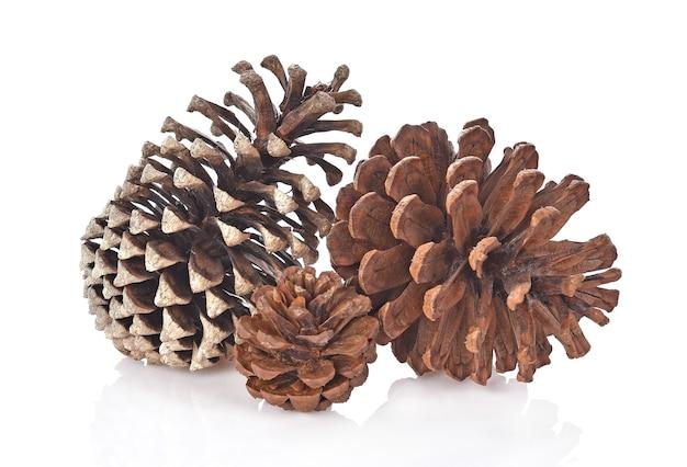 Grande conjunto de cones várias árvores coníferas, isoladas no fundo branco