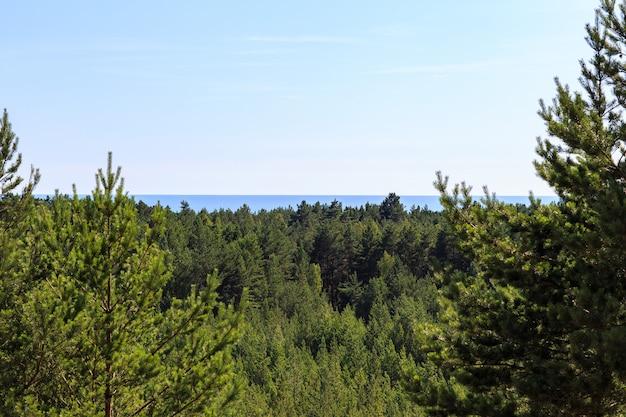 Grande duna natural de pinheiros e do mar