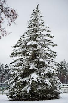 Grande e linda árvore de natal com neve na floresta