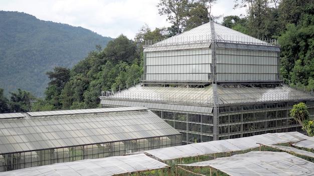 Grande estufa situada no campo em chiang mai, tailândia.