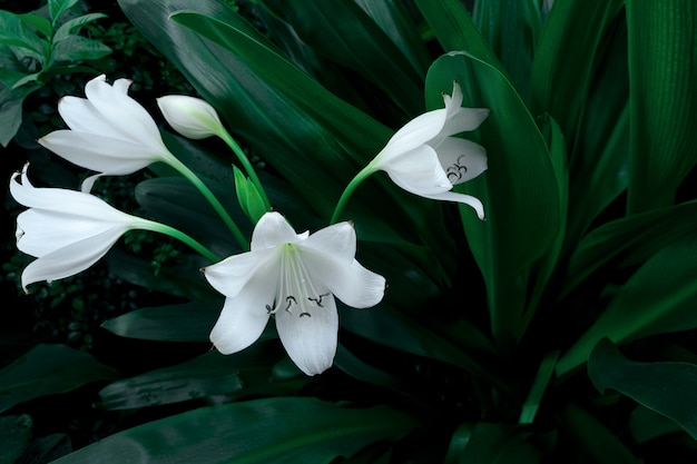 Grande flor branca da planta tropical na obscuridade - cor verde, fundo da natureza.
