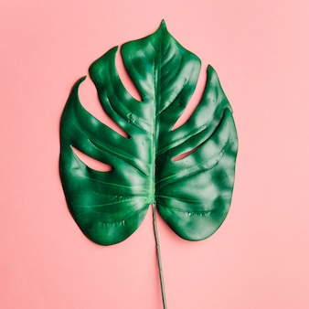 Grande folha brilhante