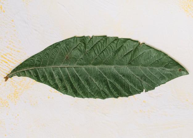 Grande folha verde na mesa de luz