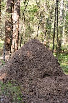 Grande formigueiro em detalhe de clareira na floresta formiga de madeira vermelha. formigas constroem uma casa