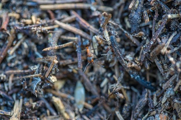 Grande formigueiro na floresta. grande formigueiro com colônia de formigas na floresta de verão. formigas no formigueiro na floresta, close up, macro