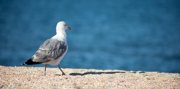 Grande gaivota branca em um monte de areia na costa
