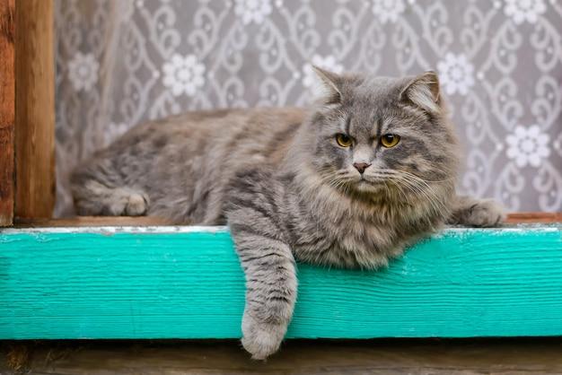 Grande gato cinzento na janela na aldeia