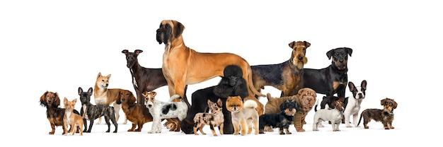 Grande grupo de cães de raça pura contra uma parede branca