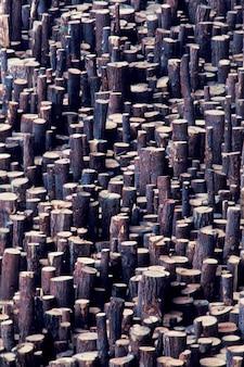 Grande grupo de logs armazenados para madeira serrada