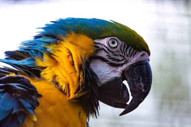 Grande papagaio arara na árvore