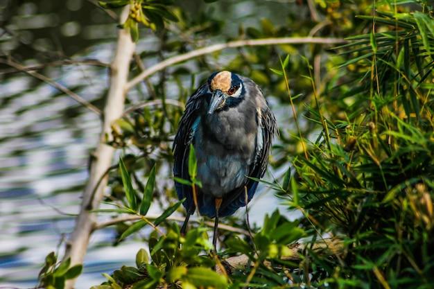Grande pássaro de cor escura imerso na natureza da república dominicana