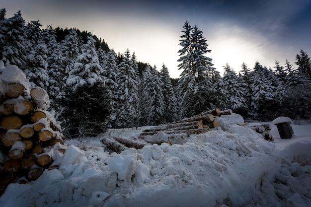 Grande pilha de toras cortadas na floresta de inverno