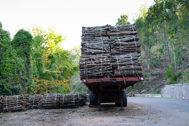 Grande pilha de toras de madeira, azinheira, árvore típica do centro da sardenha