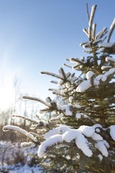Grande plano da árvore de natal com neve em um dia ensolarado e gelado