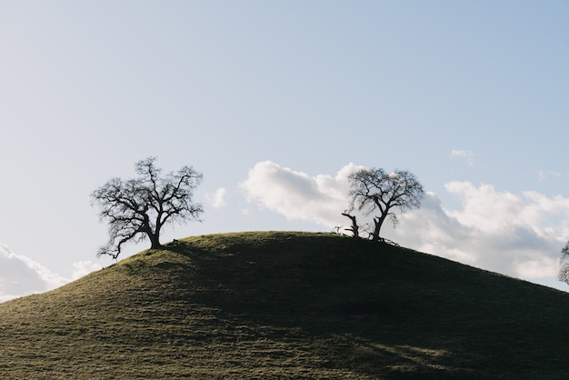 Grande plano de árvores em uma colina verde sob um céu claro com nuvens brancas