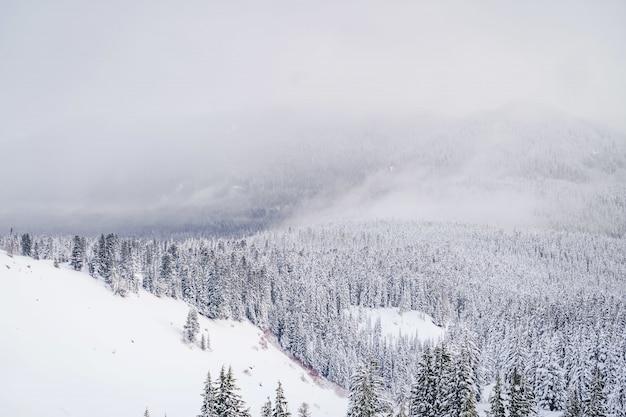 Grande plano de montanhas cheias de neve branca e toneladas de abetos