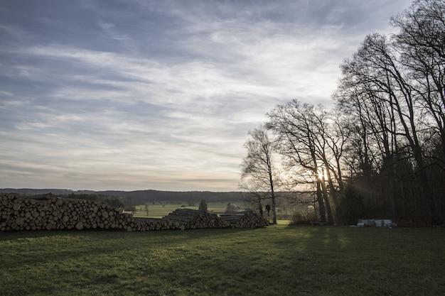 Grande plano de pilhas de lenha em um campo de grama, rodeado por árvores durante o pôr do sol
