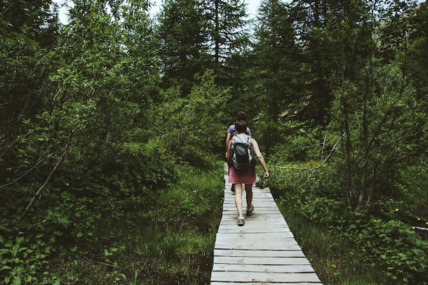 Grande plano de turistas andando por um caminho de madeira, cercado por árvores verdes