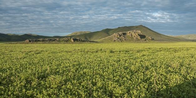 Grande plano de um campo com plantas verdes e montanhas ao longe sob um céu azul nublado