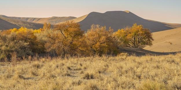 Grande plano de um deserto com arbustos secos e dunas de areia durante o dia