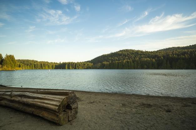 Grande plano de um enorme tronco de árvore perto do lago, rodeado por árvores sob um céu azul