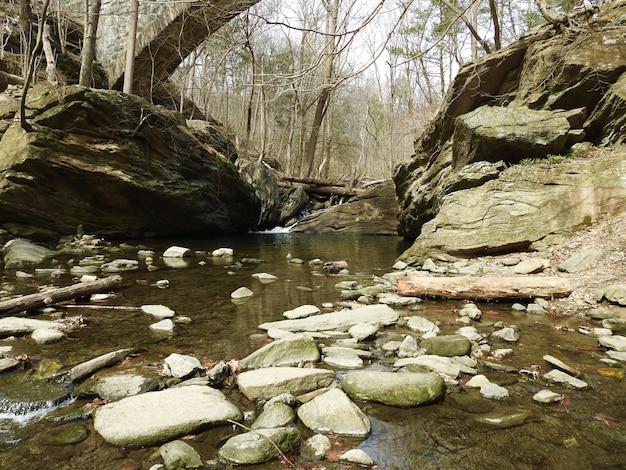 Grande plano de um rio cercado por árvores nuas com muitas pedras
