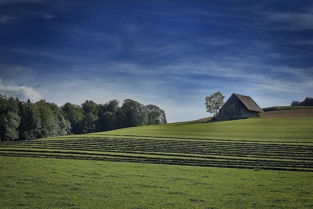 Grande plano de uma casa isolada no campo de grama, rodeado por árvores verdes sob o céu nublado