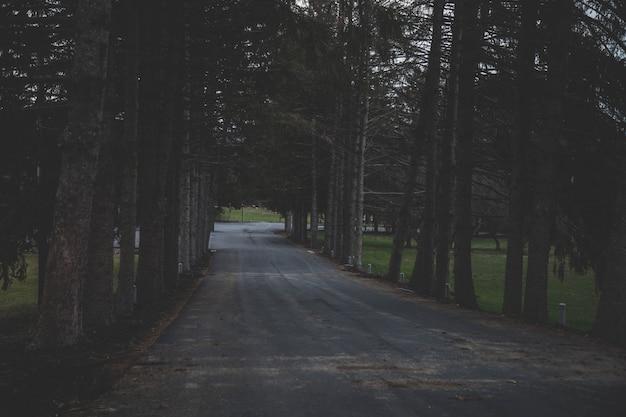 Grande plano de uma estrada cercada por árvores em uma floresta