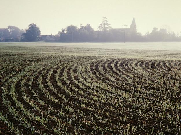 Grande plano de uma grama em solos em um campo cercado por árvores