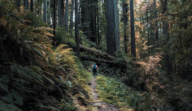 Grande plano de uma pessoa andando em um caminho estreito no meio de árvores e plantas em uma floresta