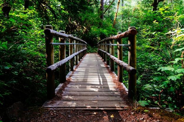 Grande plano de uma ponte de madeira, rodeada por árvores e plantas verdes