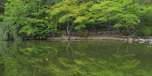 Grande plano do reflexo das belas árvores verdes em um lago